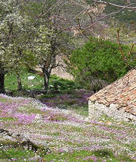 Natursteinhäuser in Griechenland